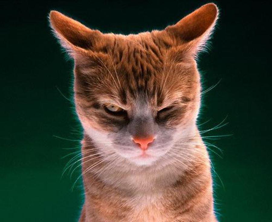 Сигналы кошек