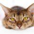 Как понять, что у кота болит желудок?