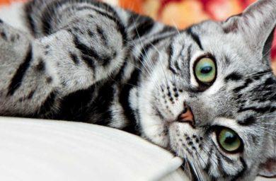 Сколько лет в среднем живут домашние кошки