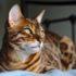 Сколько длится память у кошек?