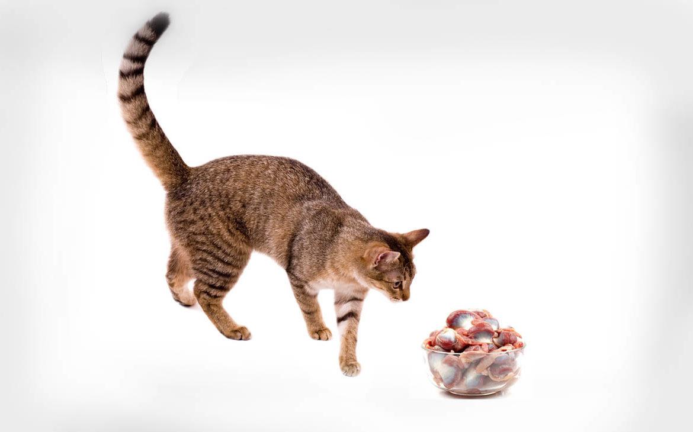 Как давать куриные лапки коту