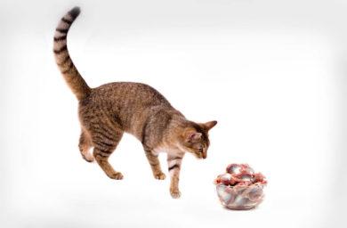 Сколько варить куриные желудки для кошки