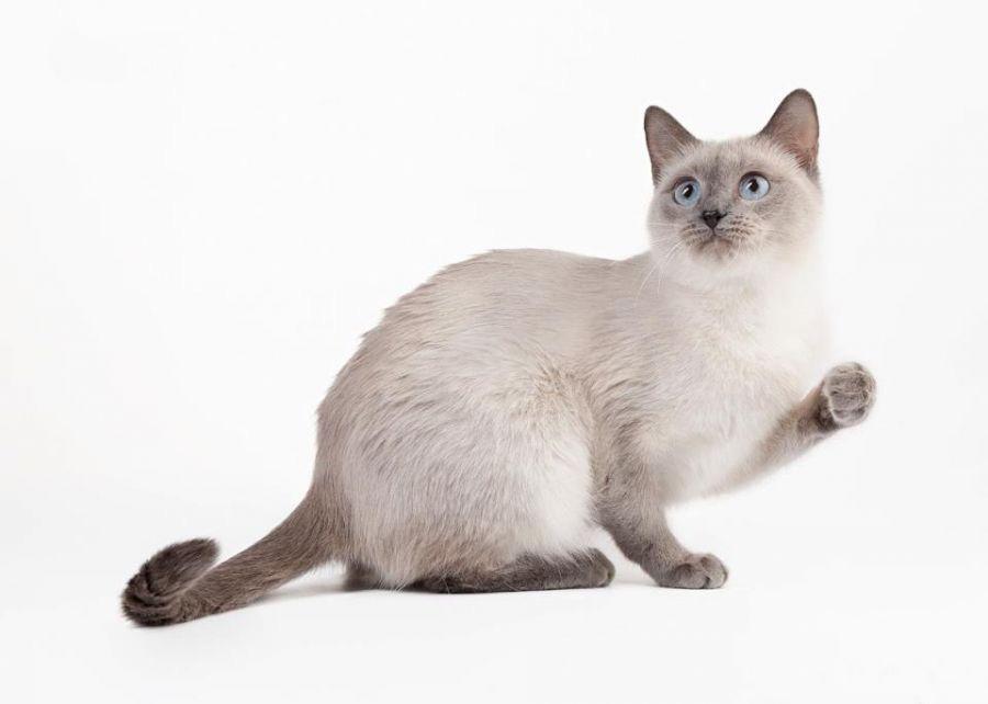 Питание кошки в домашних условиях 82