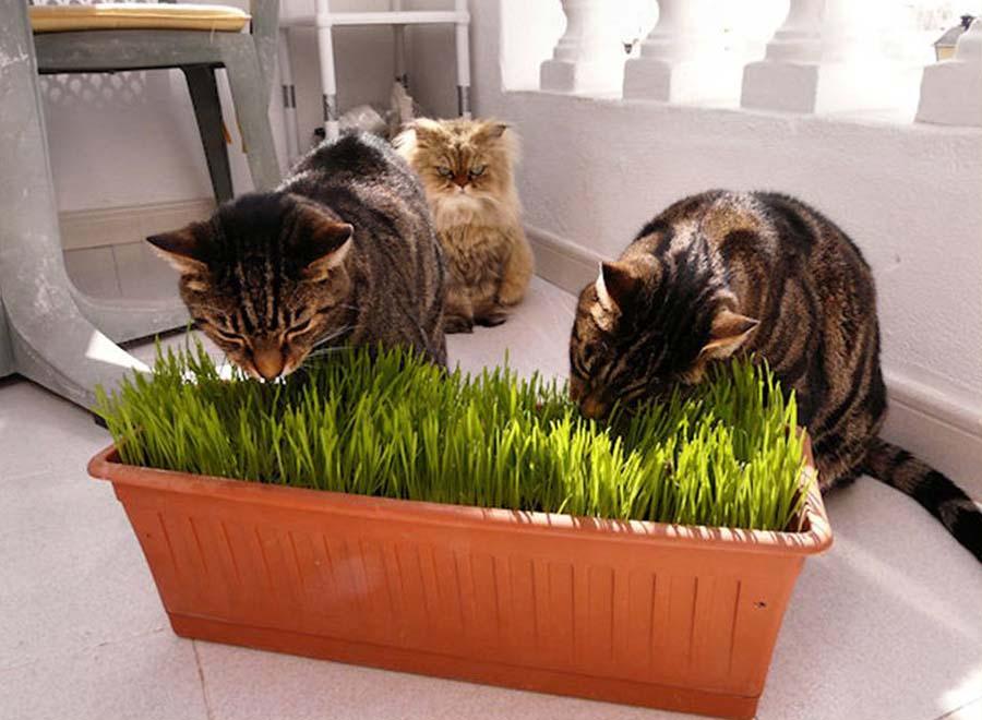 Скопление шерсти в желудке у кошки: симптомы