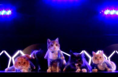 Смешные видео коты поют