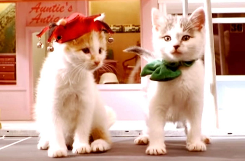 Клипы про котят – ну кто откажется посмотреть!