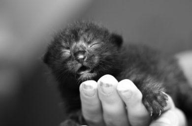 Смотреть видео жизнь до рождения кошек