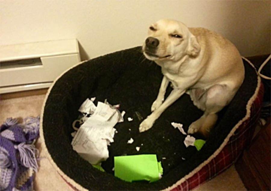 Собака устроила погром