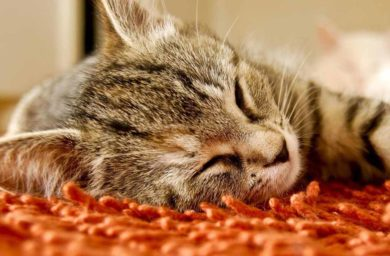 Сон кота - видео