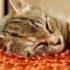 Самый кошачий сон: видео