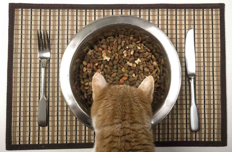 Состав кормов для кошек