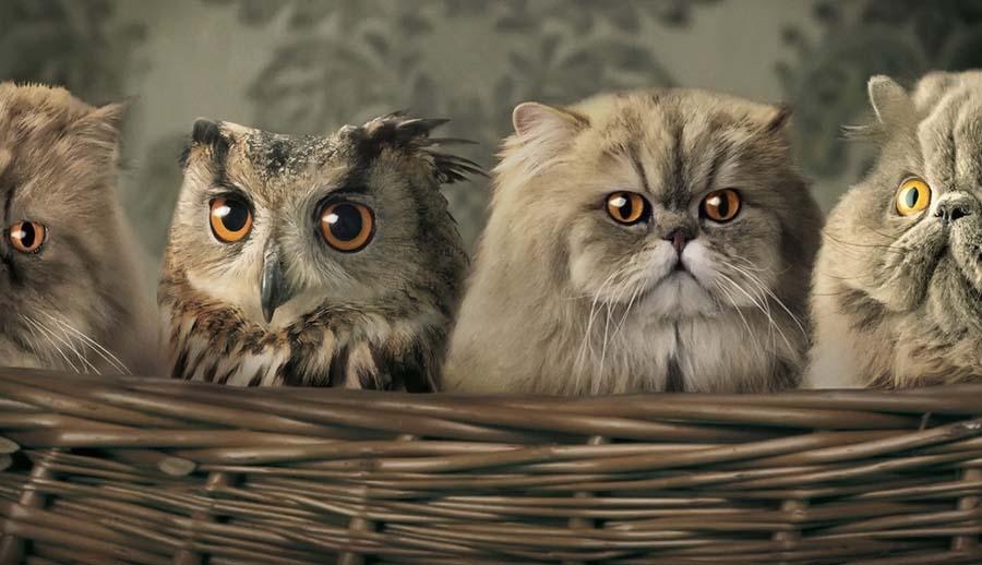 Сова и кошка в русском языке