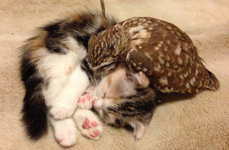 Котёнок и совёнок – фото необычных друзей
