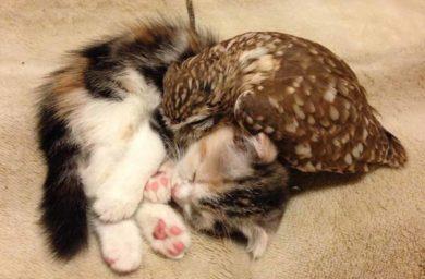 Совенок Фуку и котенок Маримо