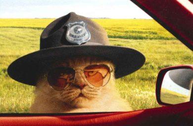 Спасение котёнка на дороге