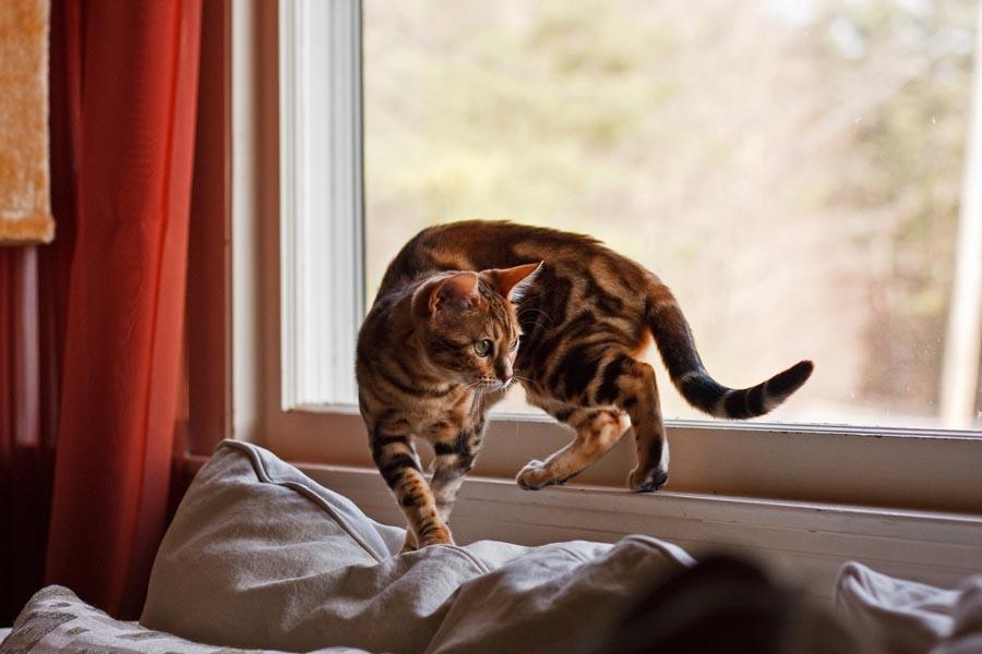 Статистика блох у кошек