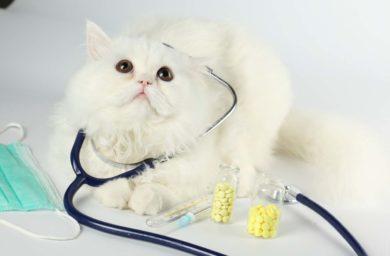 Стерилизация кошек: на какой день снимают швы