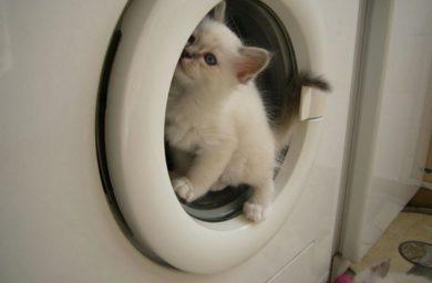 Стиральная машинка – видео с кошками