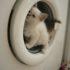 Видео с кошками: стиральная машинка — аттракцион №1