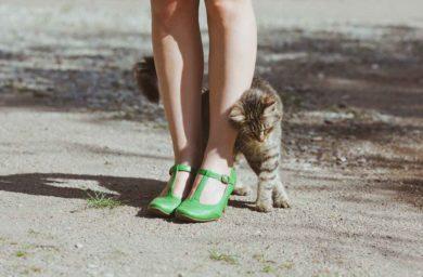 Стригущий лишай у кошек: передается ли человеку