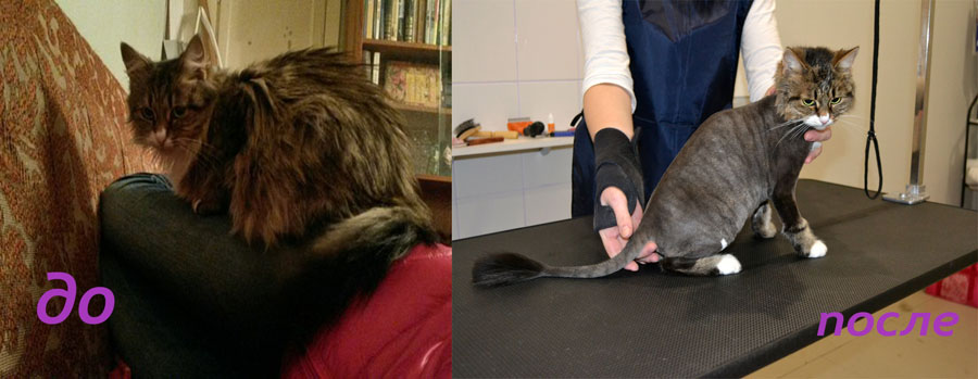Стрижка кошек фото до и после
