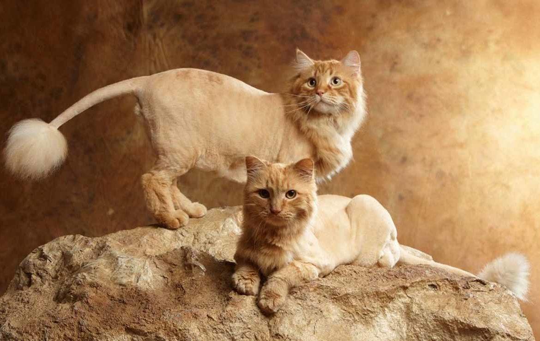 Стрижка кота под льва: фото царя зверей в мини-формате