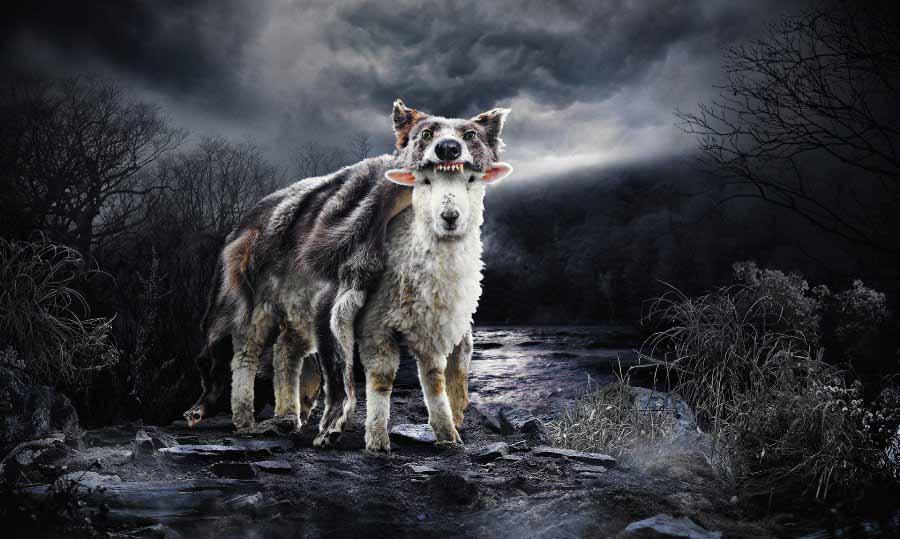 Тайный мир животных