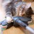 Бытовая техника и кошка: подборка видео