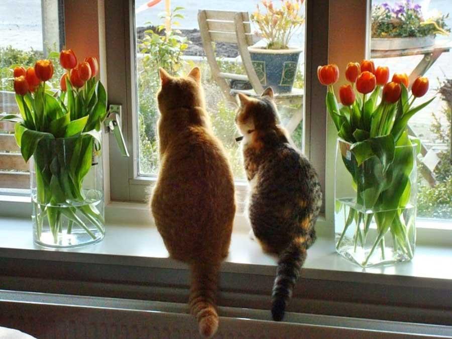 Территория кошек