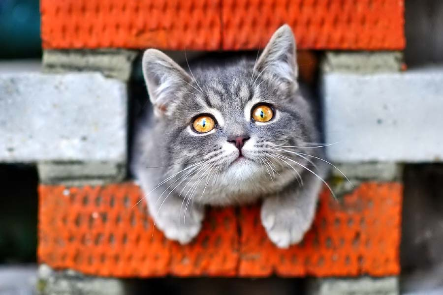 Тест: хорошо ли вы знаете кошек