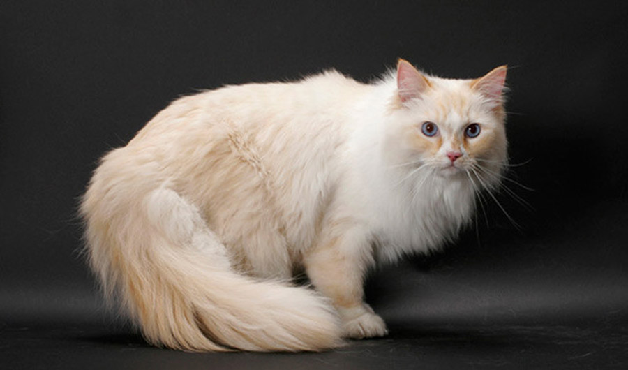 Тест: как хорошо разбираешься в кошках