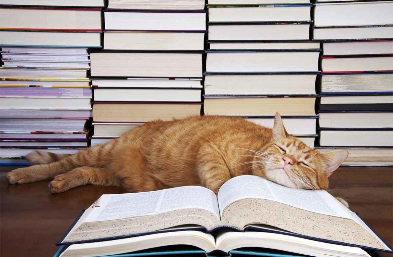 Великий русский язык: что значит слово «кошка»?