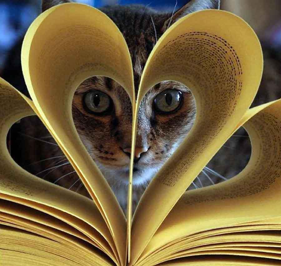 Тест: кошка в русском языке
