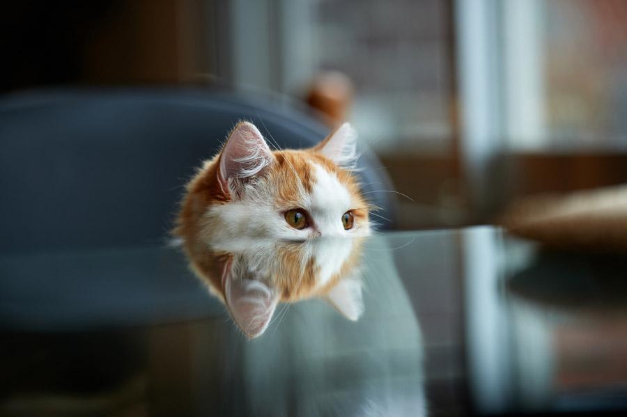 Тест: на сколько ты знаешь кошек