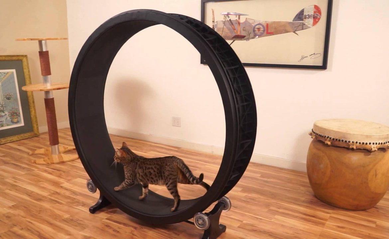 Колесо для кошек своими руками видео