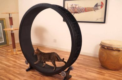 Тренажер для кошек беговое колесо