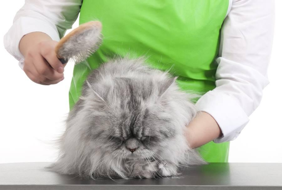 Трихобезоар у кошек