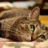 Какая память у кошек: неизведанное рядом
