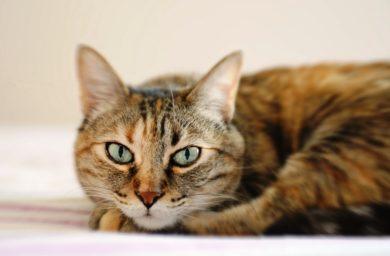 У кошки гноятся глаза причины