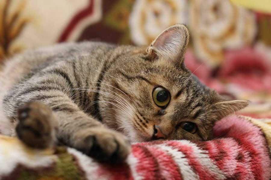 У кота из желудка не выходит шерсть из желудка
