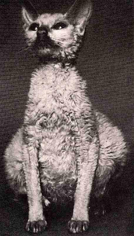 сухая форма фип у кошки симптомы специальном обзоре
