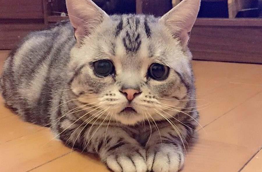 Как лечить гнойные глаза коту