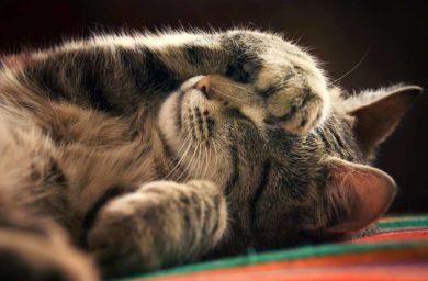 У кота сопли, чихает - чем лечить