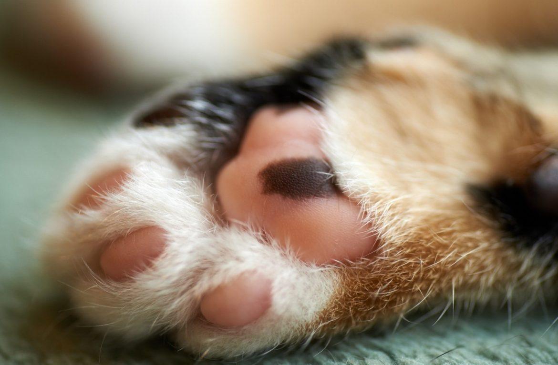 Удаление когтей у кошек: все «за» и «против»