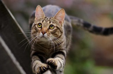 Уход за когтями кошки