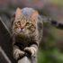 Уход за когтями кошки: маникюр для Мурки