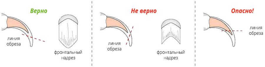 Как обрезать ногти коту