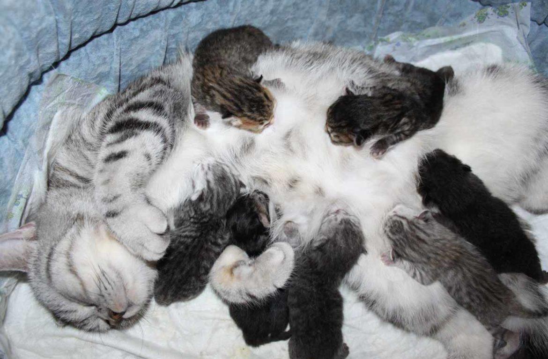 Как ухаживать за новорожденными котятами с кошкой?