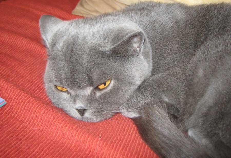 Уход за кошкой после родов без котят