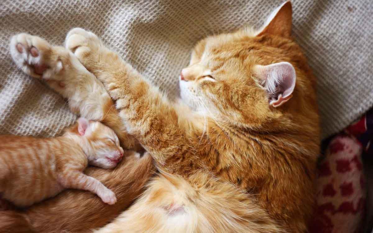 Уход за кошкой с котятами после родов